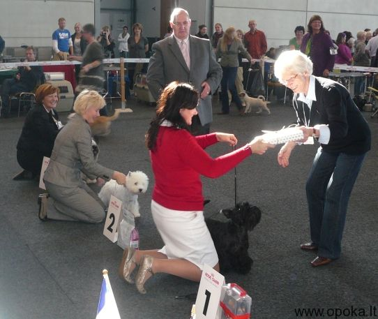 Yes !! :D The 2'd lowlegged terrier in show!