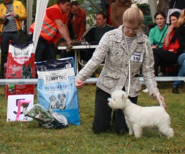 Runa-Jonava-5-BIS puppy